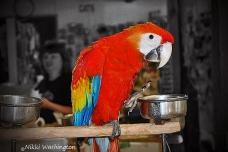 Sarlet-Macaw-2012
